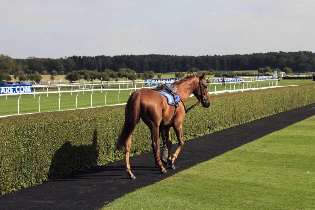 Market Rasen Horse Racing Tips | The Tipster League